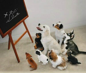 Puppy Training - DOGMA Moncton