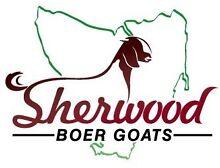 Goat - Fullblood Boer Buck Latrobe Latrobe Area Preview
