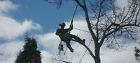 K&J Tree Service Call 226 787 6095 for a free quote
