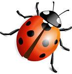 Ladybug LA