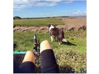 Dog walker/pet sitting Edinburgh