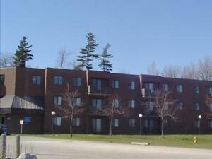 252 St. Andrews Apartments - 2 bedroom basement Apartment for...
