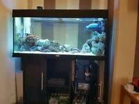 450 litre aquarium juwel