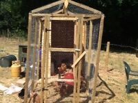 Chickhen forsale collection only torquay