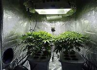 Learn to grow cannabis