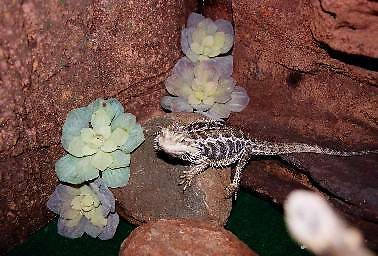 SELLING -  MOCK ROCK BACKGROUNDS FOR REPTILES OR AQUARIUMS Toowoomba 4350 Toowoomba City Preview
