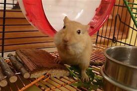 2 gerbils incl cage, gerbilarium, ball, drinking bottle, feed bowl, toilet, mite treatment etc