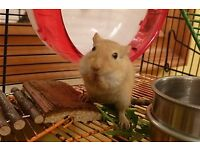 2 gerbils incl cage, gerbilarium, ball, drinking bottle, feed bowl, toilet, mite treatment etc