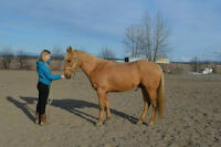 7-Year-Old Palomino Registered Palomino Geldiing For Sale