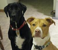 Dog sitting- gardiennage pour chien