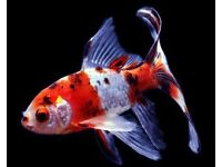 3ft Fish Tank needed