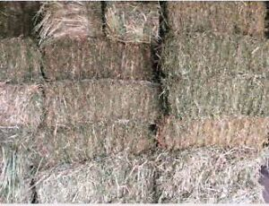 FRESH SQUARE HAY BALES Narre Warren North Casey Area Preview