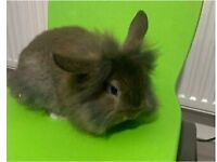 Stunning baby rabbits for sale