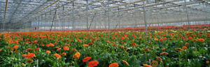 Flower Greenhouse Wanted