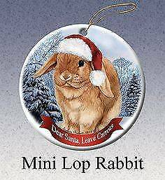 PLANNING ON GIVING A RABBIT FOR CHRISTMAS?