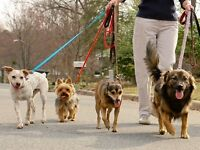 Dog walking and dog sitting service