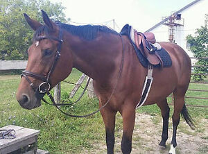 Looking for a second rider for my mare Kitchener / Waterloo Kitchener Area image 1