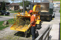 Wood chipping service & branch clean up /