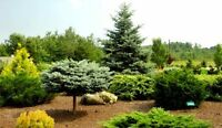Looking for unwanted Shrubs/Evergreens/Trees