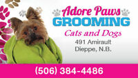 Adore Paws Grooming! Also Open Evening and Weekends!