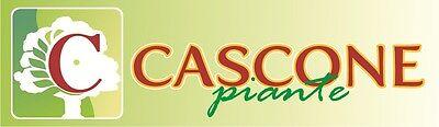 Cascone_Garden_Service