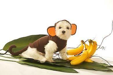 Dog Halloween Costume - Monkey Dog Costume - Pet Monkey - Monkey Dog Costumes