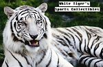 Whitetiger's Sports Collectibles