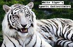 Whitetiger's Sports Cards