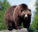 grizzlybearcsu2