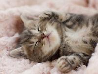 Gardienne de chat