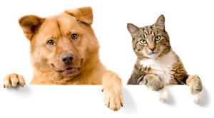 Private walks, Home visits, Pet care  - cats / dogs