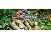 Tree felling - Removal