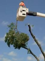 Emergency Tree Removal & Maintenance