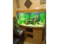 Vision 260 never had water in it aquarium stand and lights