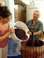 Part Time. Turn water into wine, work in an Urban Winery!