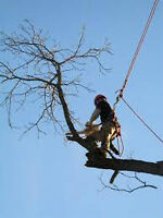 TREE REMOVAL, HENDRICK & SONS, CCHT CERTIFIED