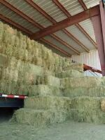 Oats and Peas small square bales for sale!