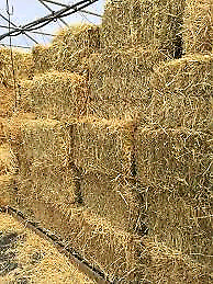 Needed for childrens Halloween event Hay bales