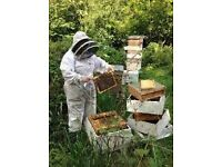 Small Area of Land Required For Bee Keeping