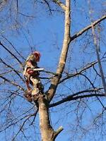 *******Tree Cutter*****Insured/Free Quotes