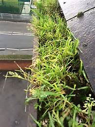 PROFESSIONAL GUTTER CLEARING - NO MESS, NO LADDERS, ALL DONE FROM GROUND LEVEL