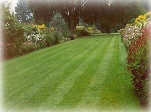 Grass cut & maintenance