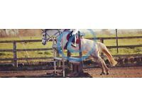 Competition Pony For Loan