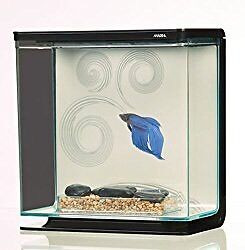 Small better fish tank for sale
