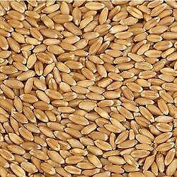Looking for Durum  and Large Green Lentil seed