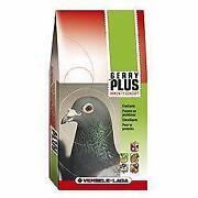 Pigeon Corn
