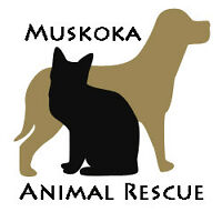 Foster Homes Needed - Muskoka/Parry Sound Area