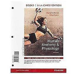Anatomy books ebay human anatomy and physiology marieb fandeluxe Images