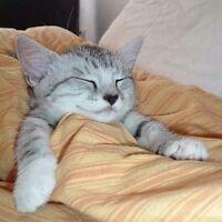Pension pour chat sans cage 10$ par jour!