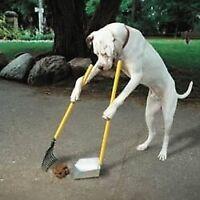 Dog Poop Clean Up